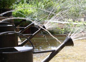 fontaine arrosoir